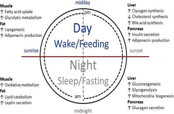 iké diéta